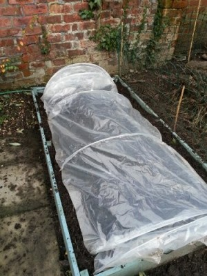 Raised veg bed with plastic cloche