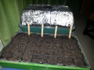 First sowing of 2013