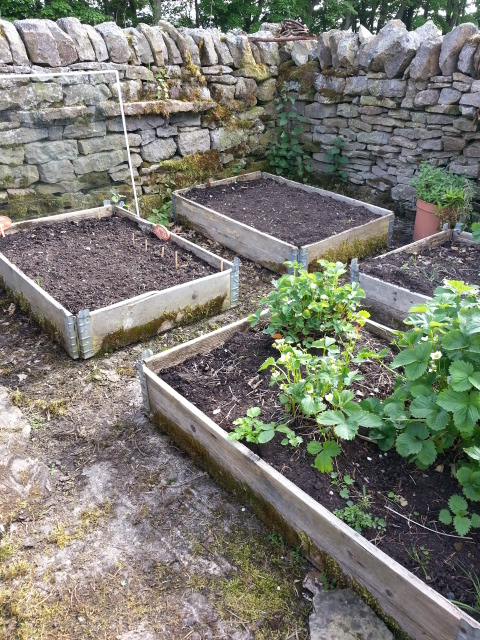 Original raised beds
