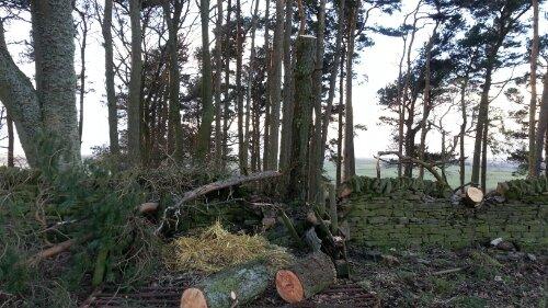 Tree back upright again