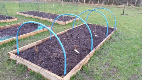 Soft fruit, raised bed