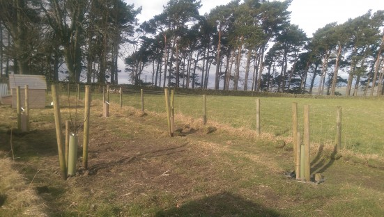 Fruit trees finally in place