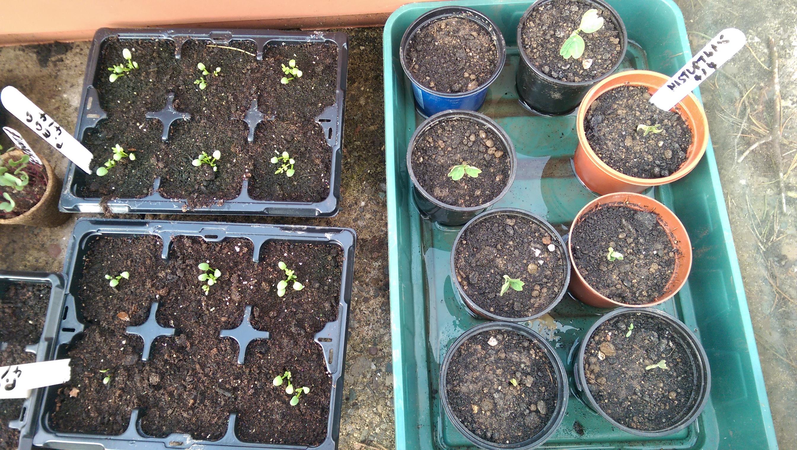 Seeds #4