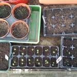 Seeds #3
