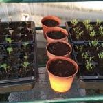 Seeds #2