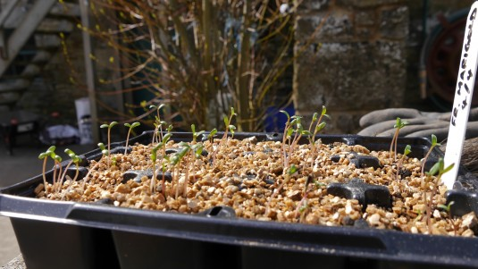 Flower seeds making good progress