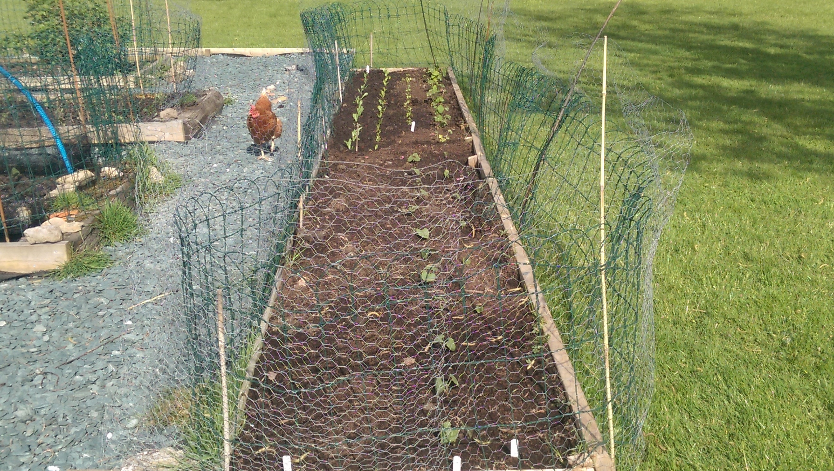 Expansion into new raised bed