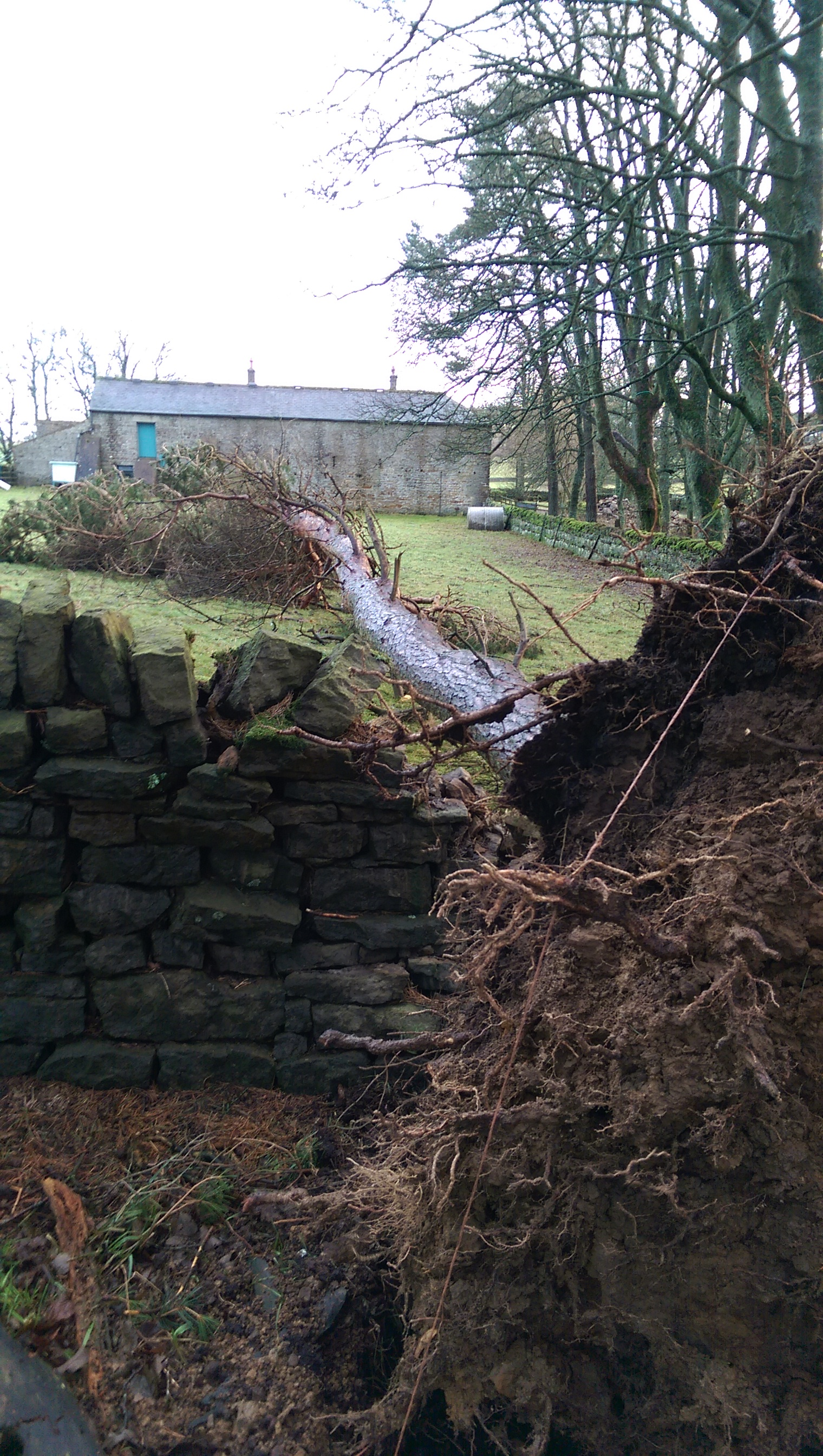 Free firewood and stone walling practice