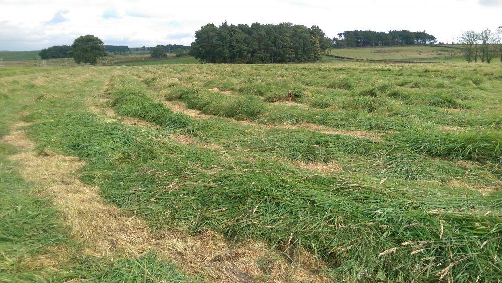 Freshly cut field