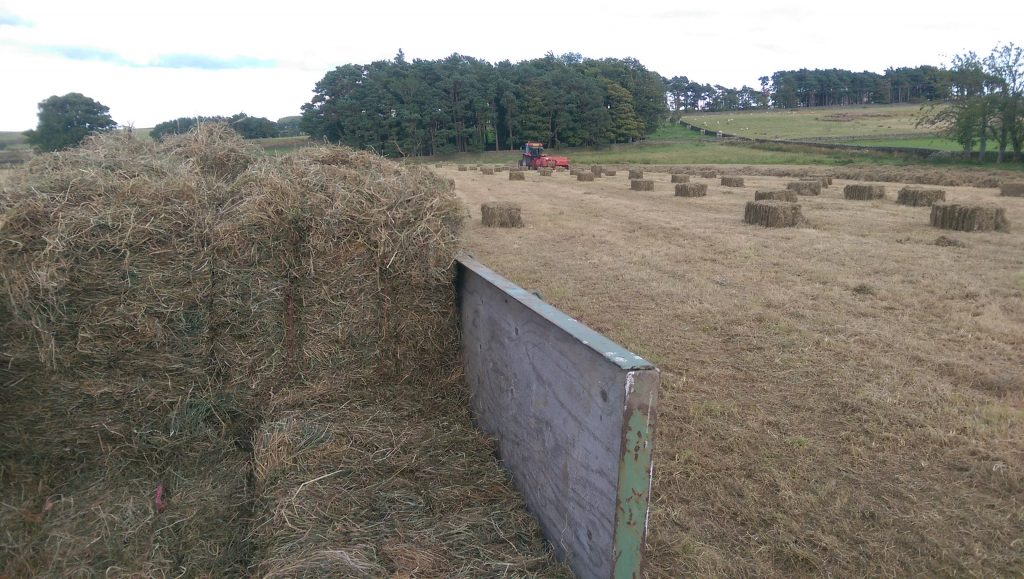 Bringing in the bales