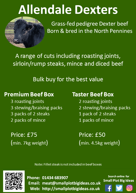 Grass-fed beef boxes for sale