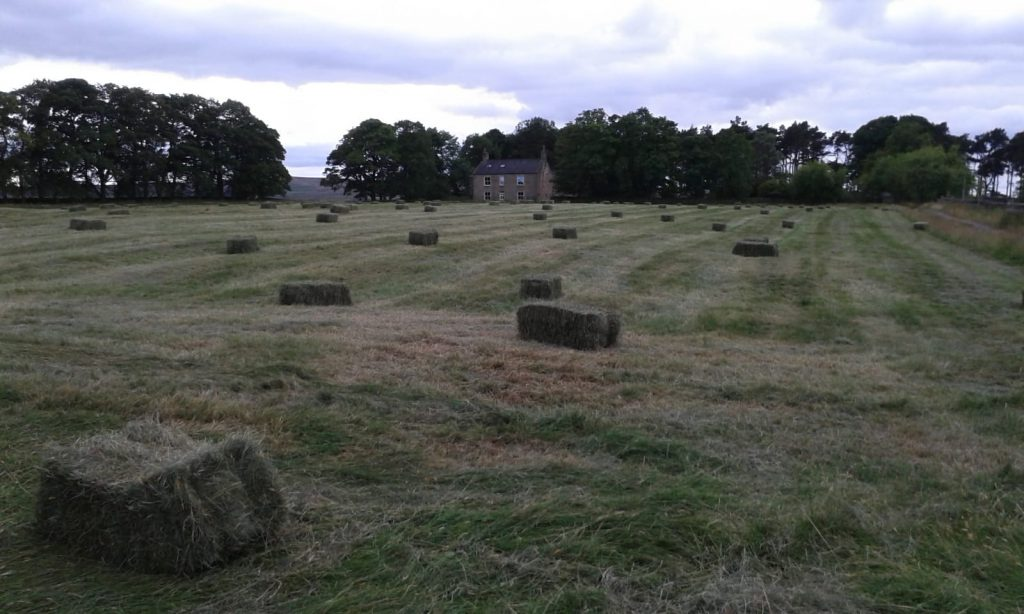 Hay cut and baled, just waiting to be brought in